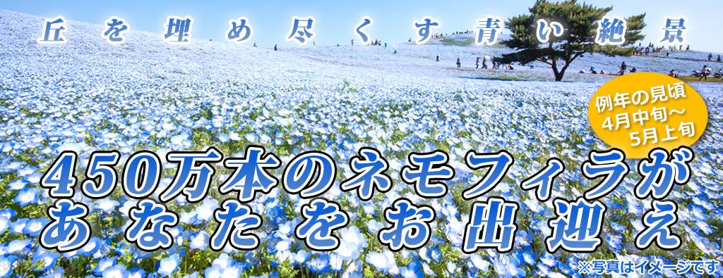 ネモフィラ観賞ツアー2019