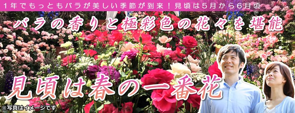 春バラ観賞ツアー2019