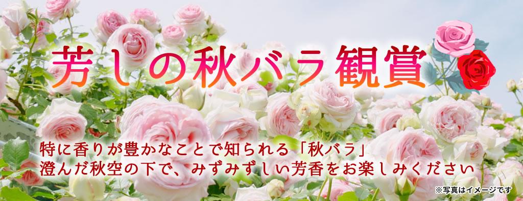 秋バラ観賞ツアー